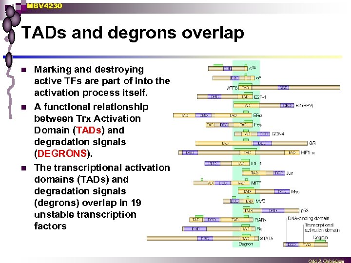 MBV 4230 TADs and degrons overlap n n n Marking and destroying active TFs
