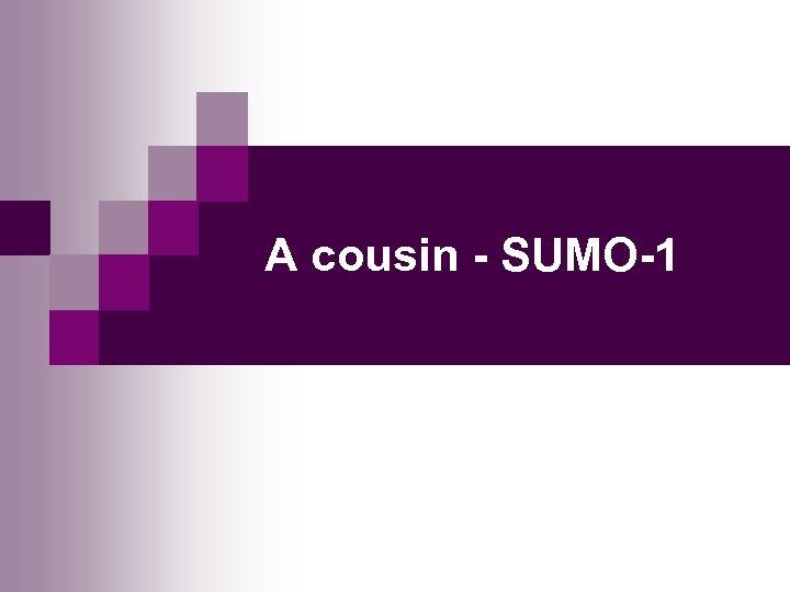 A cousin - SUMO-1