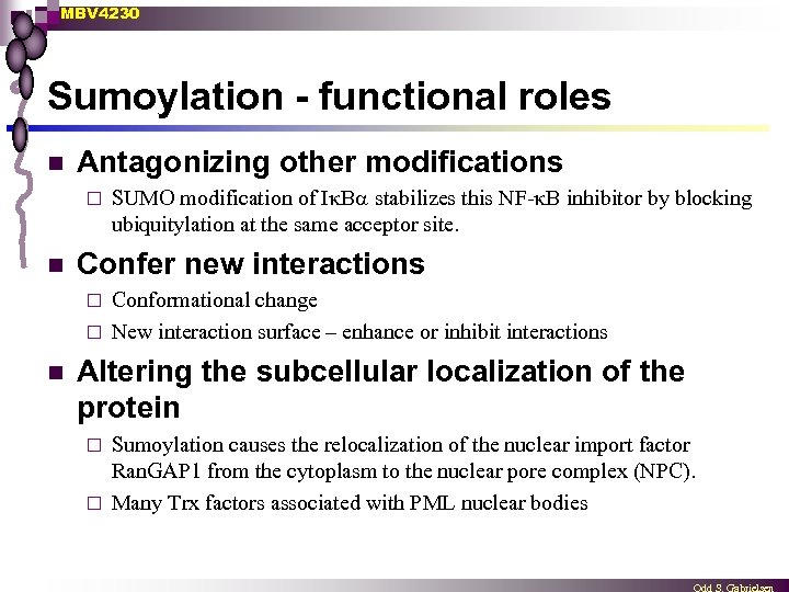 MBV 4230 Sumoylation - functional roles n Antagonizing other modifications ¨ n SUMO modification