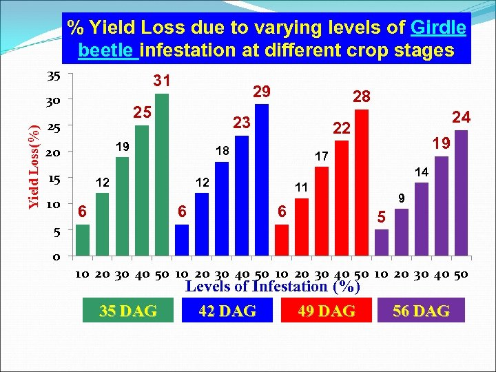 % Yield Loss due to varying levels of Girdle beetle infestation at different crop