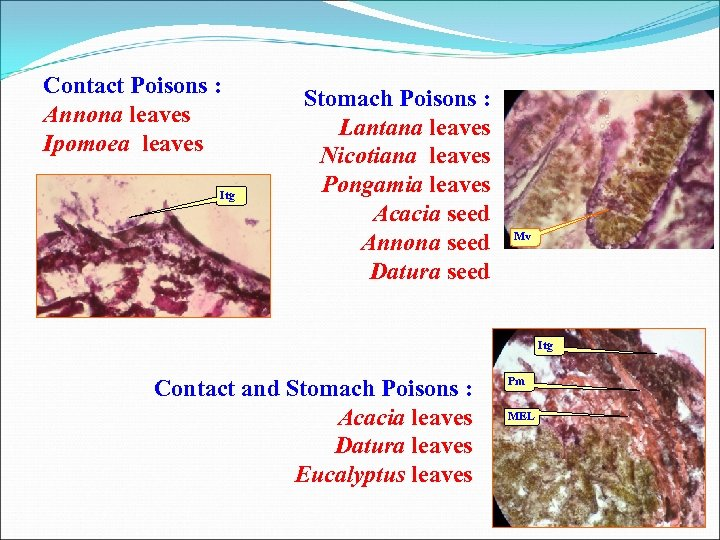 Contact Poisons : Annona leaves Ipomoea leaves Itg Stomach Poisons : Lantana leaves Nicotiana