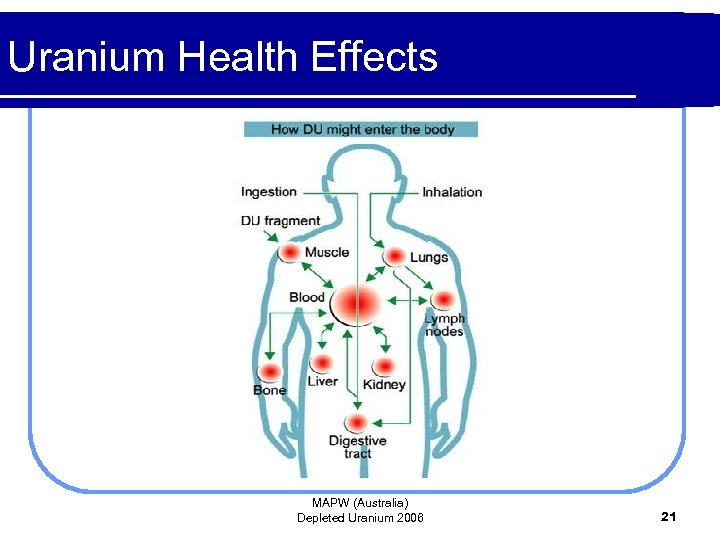 Uranium Health Effects MAPW (Australia) Depleted Uranium 2006 21