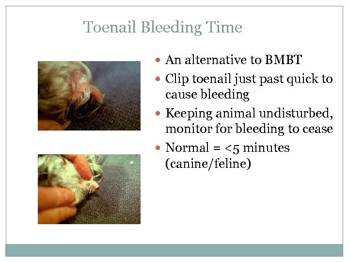 Toenail Bleeding Time An alternative to BMBT Clip toenail just past quick to cause