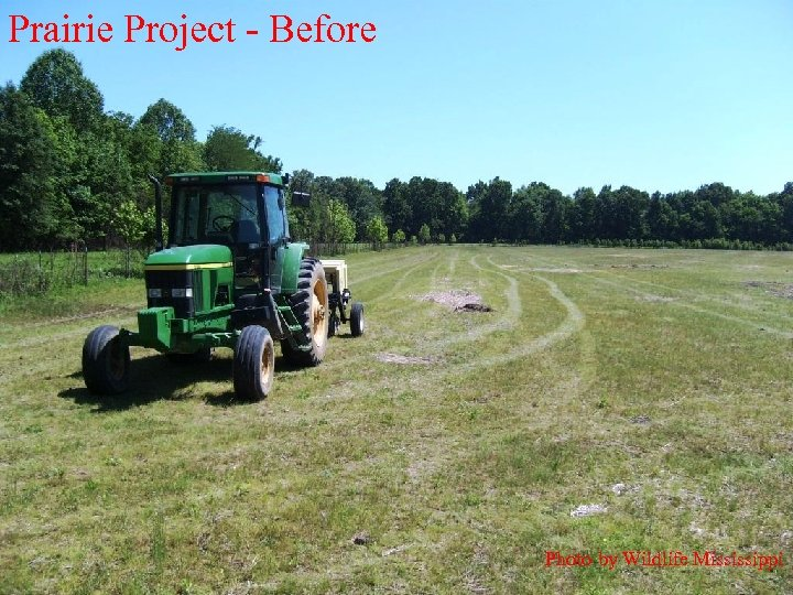 Prairie Project - Before Photo by Wildlife Mississippi