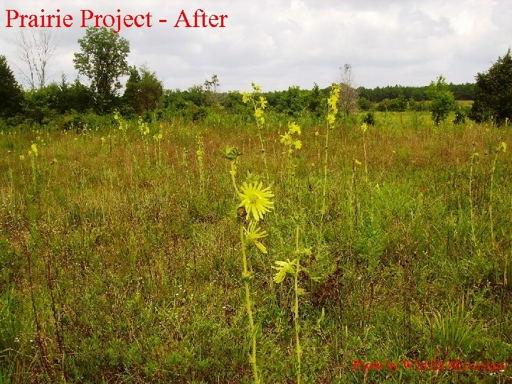 Prairie Project - After Photo by Wildlife Mississippi