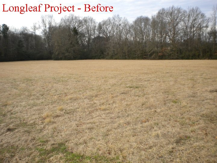 Longleaf Project - Before