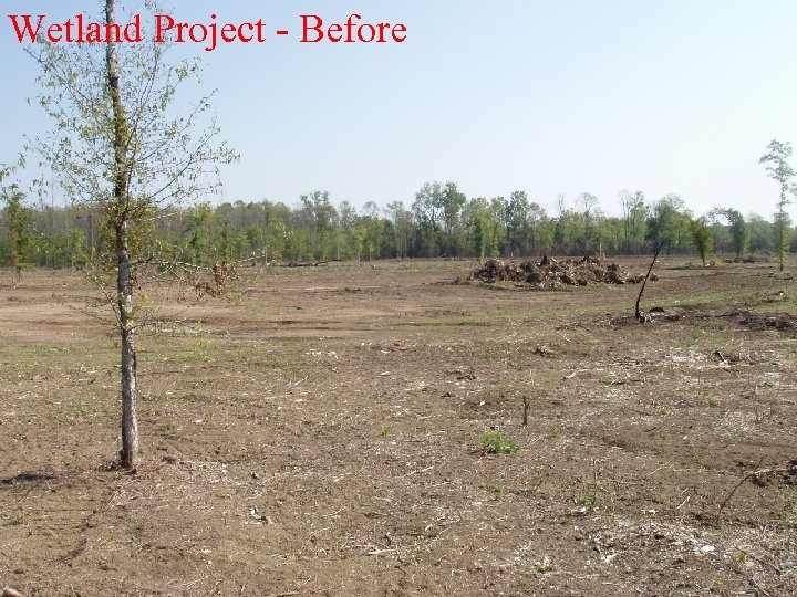 Wetland Project - Before