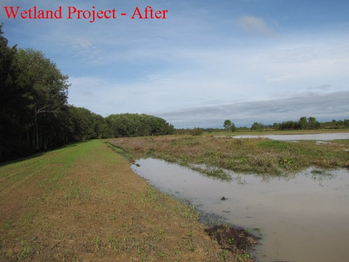 Wetland Project - After