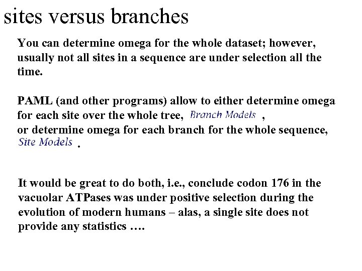 sites versus branches You can determine omega for the whole dataset; however, usually not