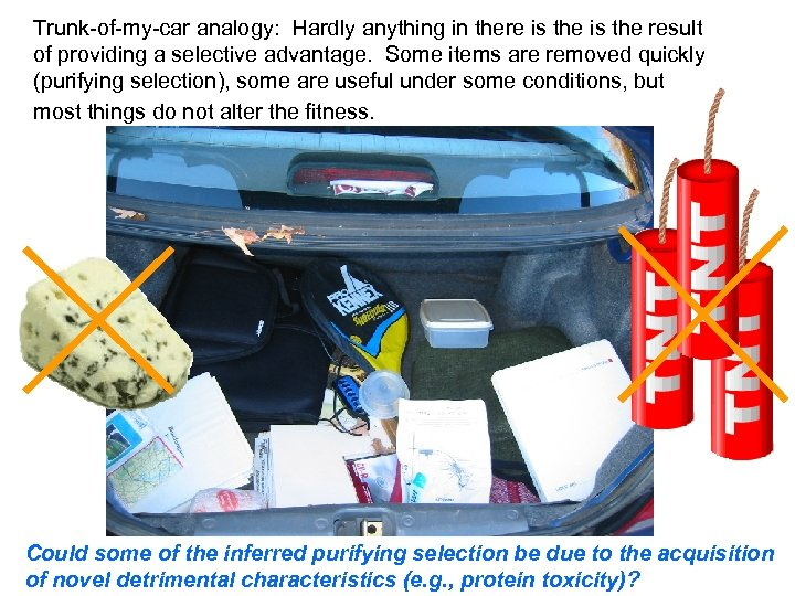 Trunk-of-my-car analogy: Hardly anything in there is the result of providing a selective advantage.