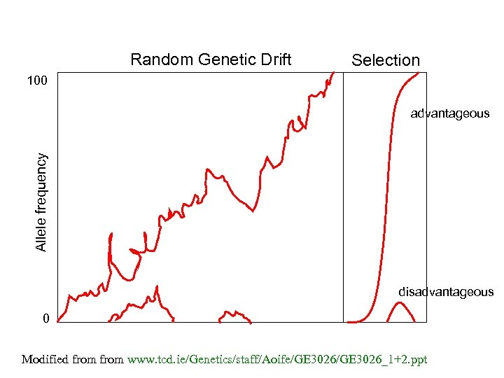 Random Genetic Drift Selection 100 Allele frequency advantageous disadvantageous 0 Modified from www. tcd.