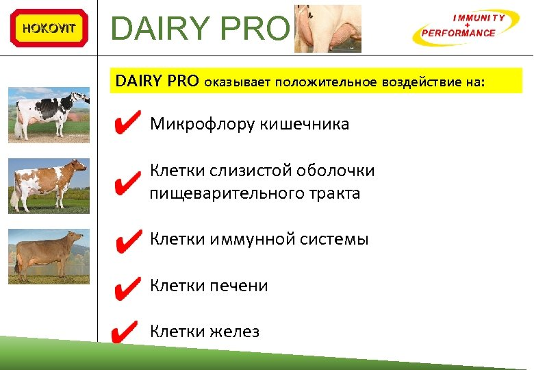 DAIRY PRO оказывает положительное воздействие на: Микрофлору кишечника Клетки слизистой оболочки пищеварительного тракта Клетки