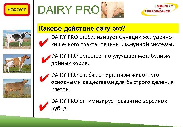 DAIRY PRO Каково действие dairy pro? DAIRY PRO стабилизирует функции желудочнокишечного тракта, печени иммунной