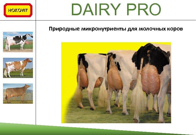 DAIRY PRO Природные микронутриенты для молочных коров