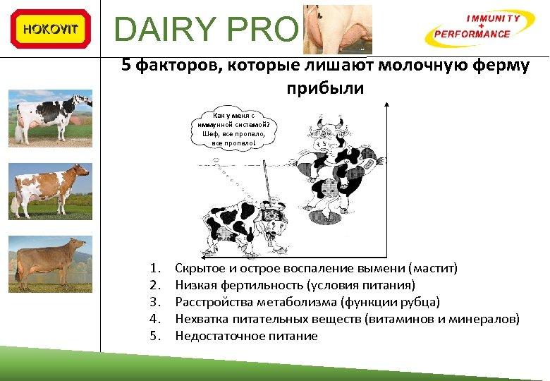 DAIRY PRO 5 факторов, которые лишают молочную ферму прибыли от Как у меня с