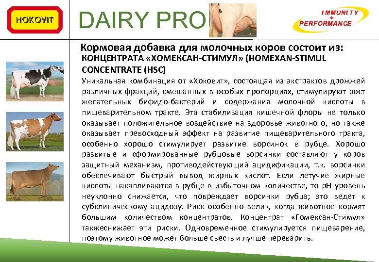 DAIRY PRO Кормовая добавка для молочных коров состоит из: КОНЦЕНТРАТА «ХОМЕКСАН‐СТИМУЛ» (HOMEXAN‐STIMUL CONCENTRATE (HSC)