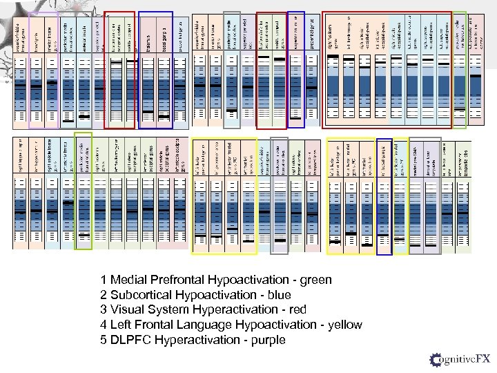 1 Medial Prefrontal Hypoactivation - green 2 Subcortical Hypoactivation - blue 3 Visual System