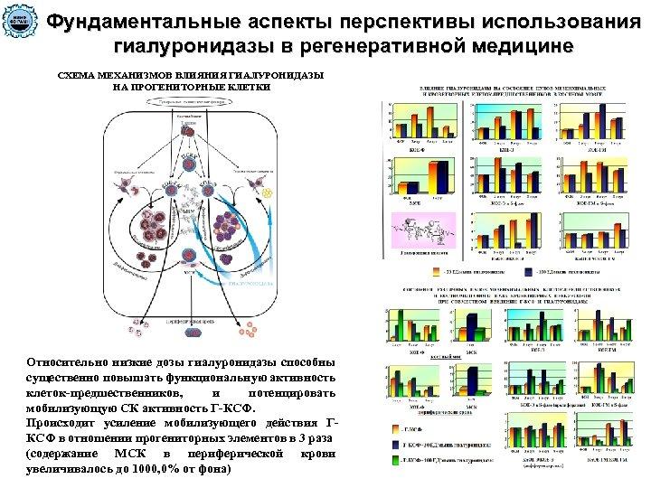 Фундаментальные аспекты перспективы использования гиалуронидазы в регенеративной медицине СХЕМА МЕХАНИЗМОВ ВЛИЯНИЯ ГИАЛУРОНИДАЗЫ НА ПРОГЕНИТОРНЫЕ