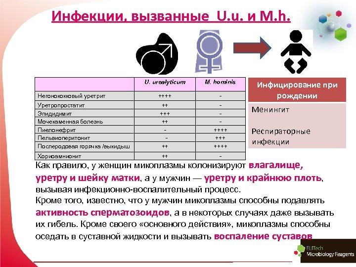 Инфекции, вызванные U. u. и M. h. U. urealyticum M. hominis Негонококковый уретрит ++++