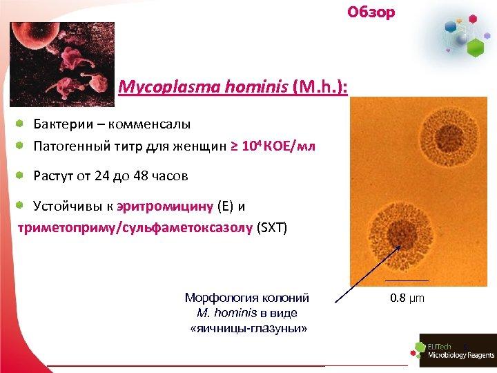 Обзор Mycoplasma hominis (M. h. ): Бактерии – комменсалы Патогенный титр для женщин ≥