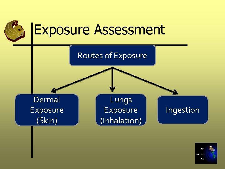 Exposure Assessment Routes of Exposure Dermal Exposure (Skin) Lungs Exposure (Inhalation) Ingestion