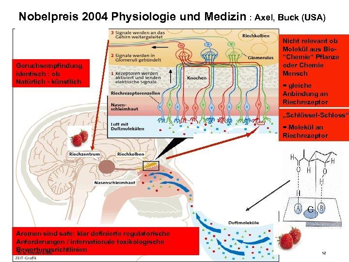 Nobelpreis 2004 Physiologie und Medizin : Axel, Buck (USA) Geruchsempfindung identisch : ob Natürlich