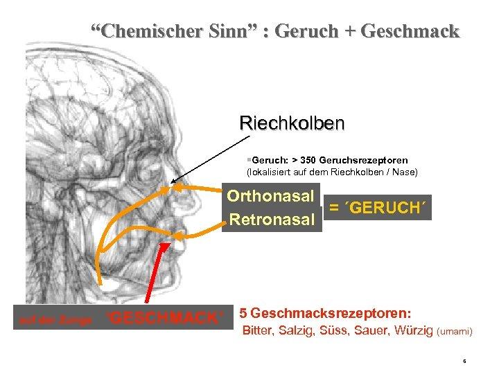 """""""Chemischer Sinn"""" : Geruch + Geschmack Riechkolben §Geruch: > 350 Geruchsrezeptoren (lokalisiert auf dem"""