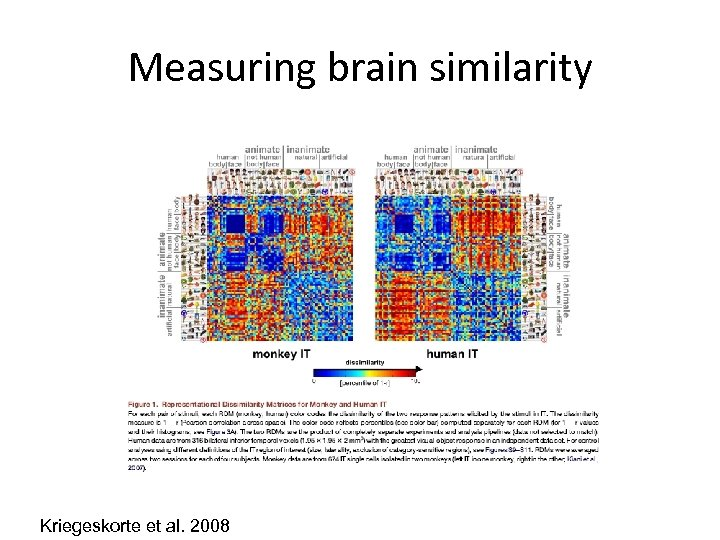 Measuring brain similarity Kriegeskorte et al. 2008
