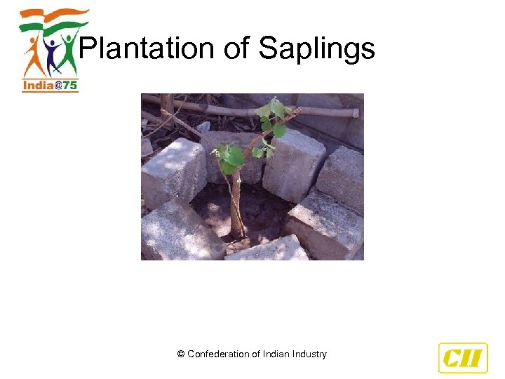 Plantation of Saplings © Confederation of Indian Industry