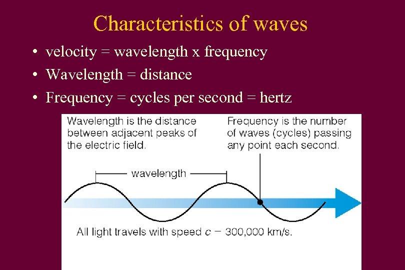 Characteristics of waves • velocity = wavelength x frequency • Wavelength = distance •