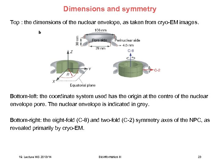 Dimensions and symmetry Top : the dimensions of the nuclear envelope, as taken from