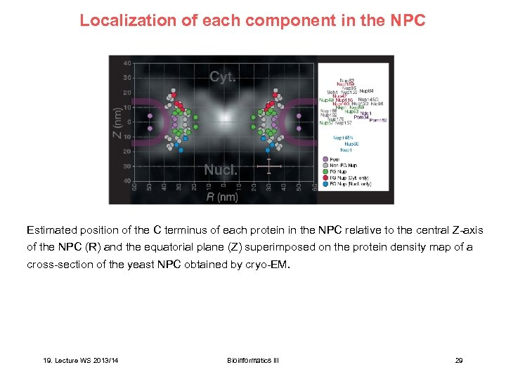 Localization of each component in the NPC Estimated position of the C terminus of