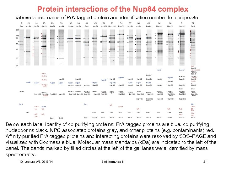 Protein interactions of the Nup 84 complex above lanes: name of Pr. A-tagged protein