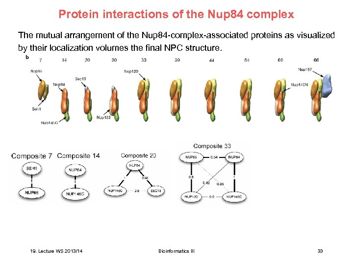 Protein interactions of the Nup 84 complex The mutual arrangement of the Nup 84