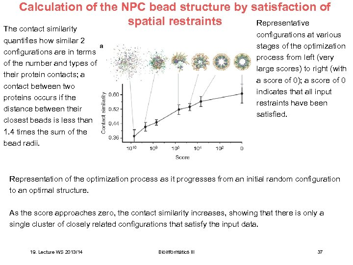 Calculation of the NPC bead structure by satisfaction of spatial restraints Representative The contact