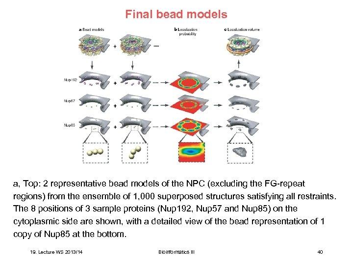 Final bead models a, Top: 2 representative bead models of the NPC (excluding the