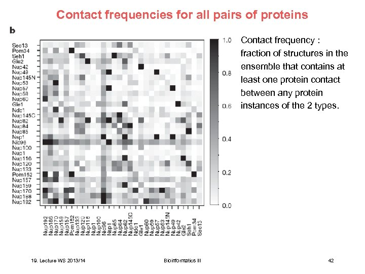 Contact frequencies for all pairs of proteins 19. Lecture WS 2013/14 Contact frequency :