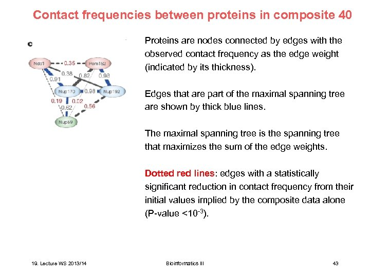 Contact frequencies between proteins in composite 40 Proteins are nodes connected by edges with