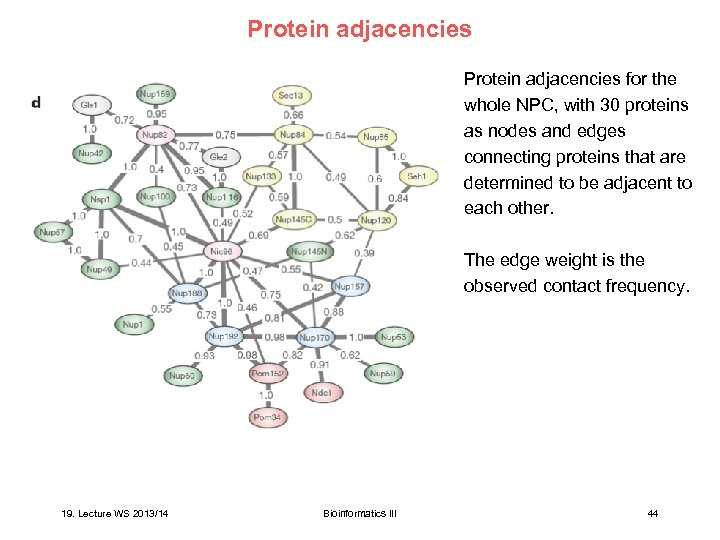 Protein adjacencies for the whole NPC, with 30 proteins as nodes and edges connecting