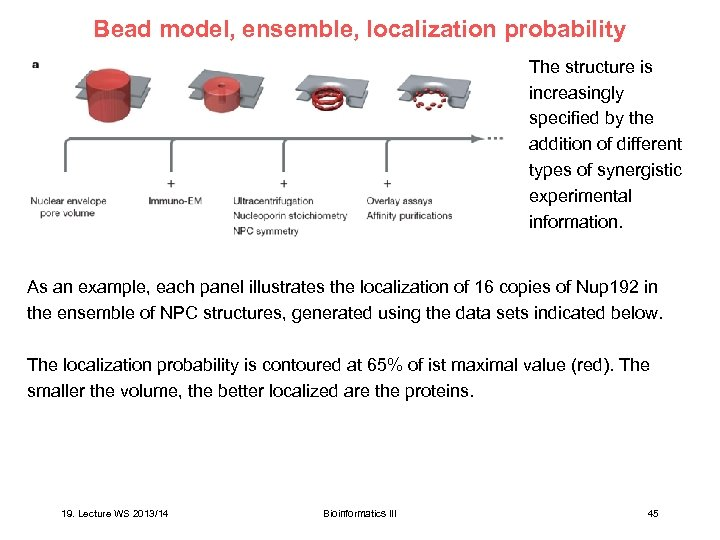 Bead model, ensemble, localization probability The structure is increasingly specified by the addition of