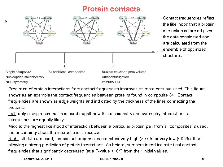 Protein contacts Contact frequencies reflect the likelihood that a protein interaction is formed given