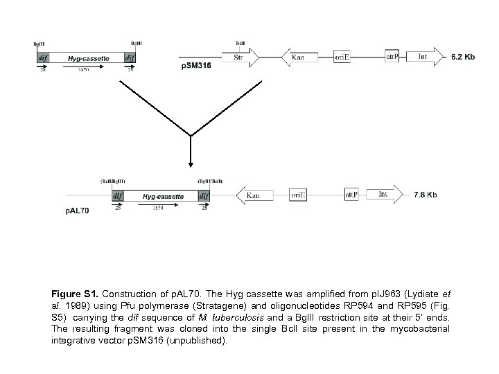 Figure S 1. Construction of p. AL 70. The Hyg cassette was amplified from
