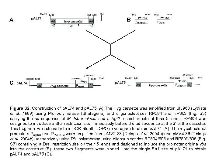 A B C Figure S 2. Construction of p. AL 74 and p. AL