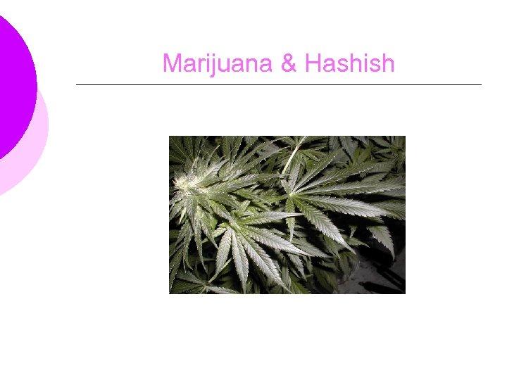 Marijuana & Hashish