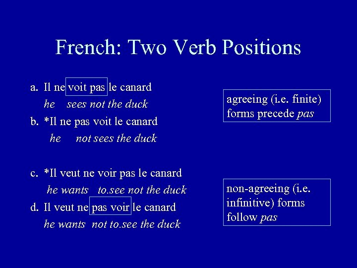 French: Two Verb Positions a. Il ne voit pas le canard he sees not