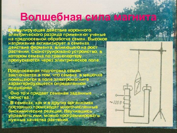 Волшебная сила магнита Стимулирующее действие коронного электрического разряда применяют ученые на предпосевной обработке семян.