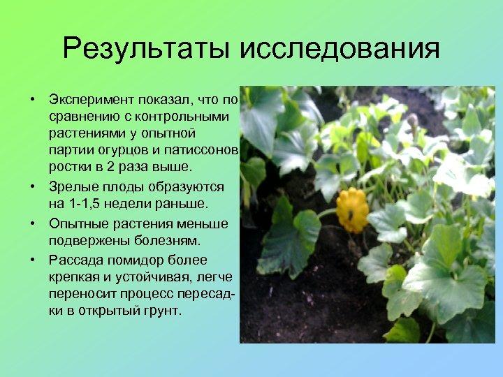 Результаты исследования • Эксперимент показал, что по сравнению с контрольными растениями у опытной партии