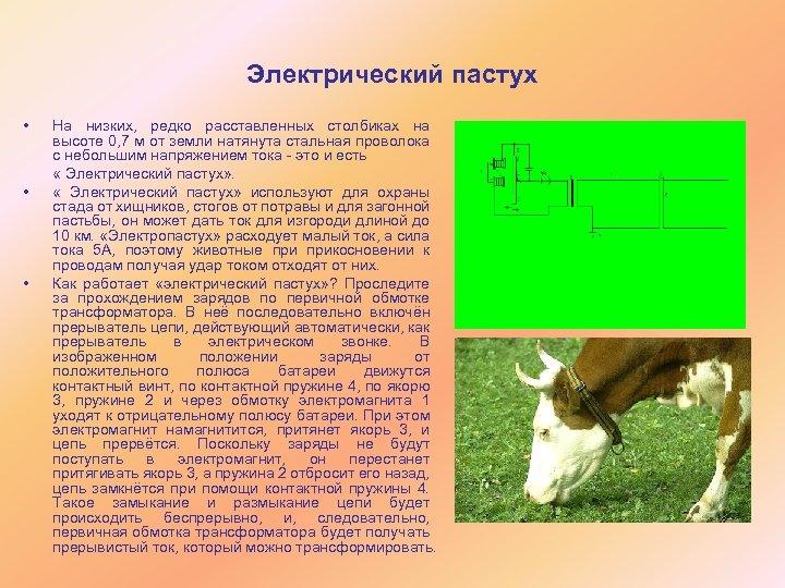 Электрический пастух • На низких, редко расставленных столбиках на высоте 0, 7 м от