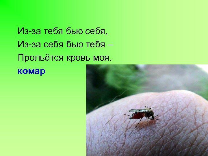 Из-за тебя бью себя, Из-за себя бью тебя – Прольётся кровь моя. комар