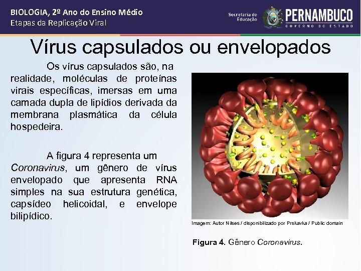 BIOLOGIA, 2º Ano do Ensino Médio Etapas da Replicação Viral Vírus capsulados ou envelopados